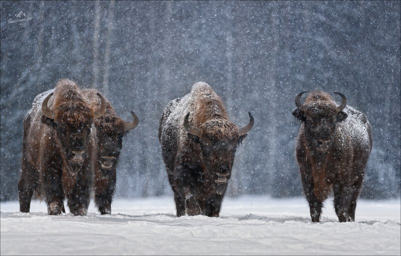 Let It Snow ... фото превью