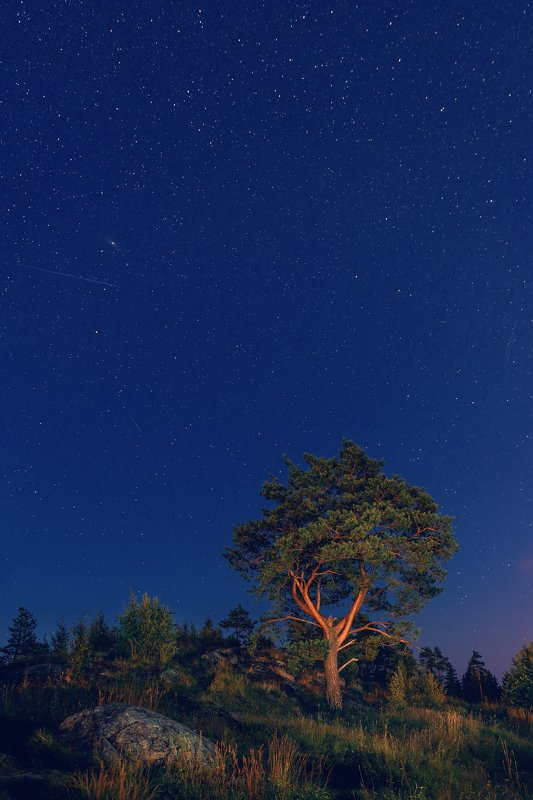 карелия, звезды, ночь, паасо, гора, сосна, небо, синий, сортавала Звездное небо Карелииphoto preview