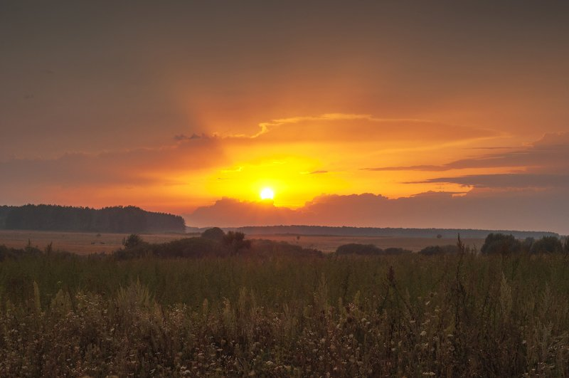 закат,лето,поле,лошади,солнце Великолепный закатphoto preview