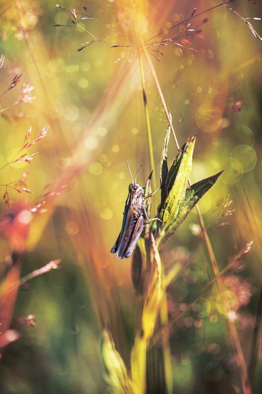 лето природа боке кузнечик трава Мечтательphoto preview