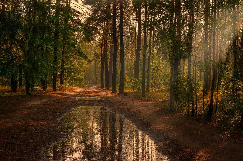 landscape, пейзаж, утро, лес,  деревья, солнечный свет,  солнце, природа, лужи,  прогулка, после дождикаphoto preview