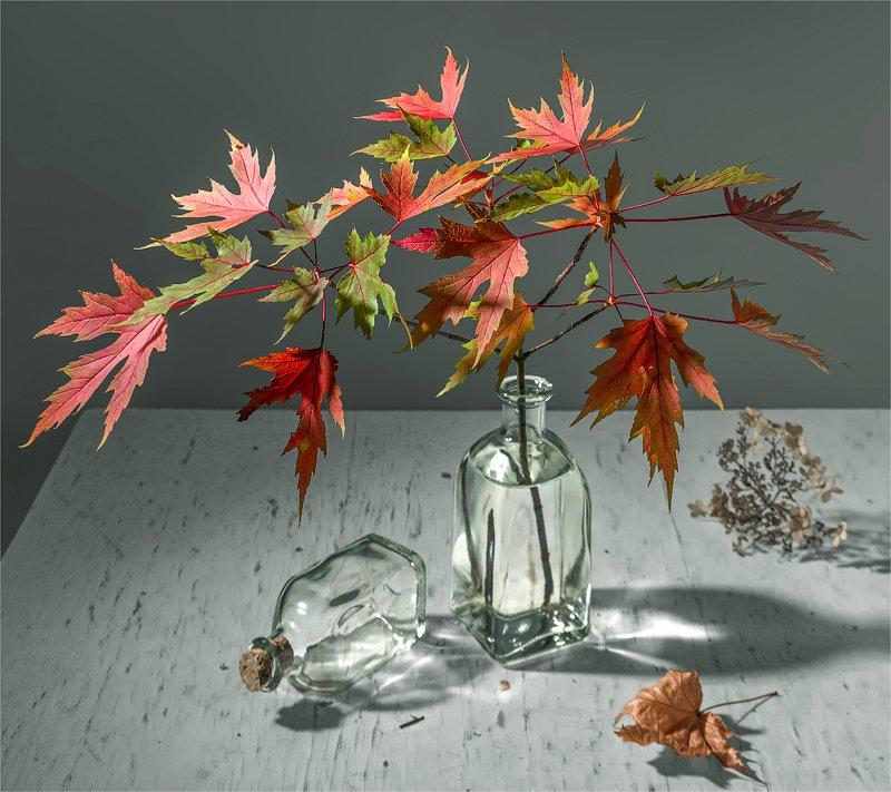 still life, натюрморт,    винтаж,   листья, лист клена, осенние краски, осень, ветка, натюрморт с осенними листьямиphoto preview