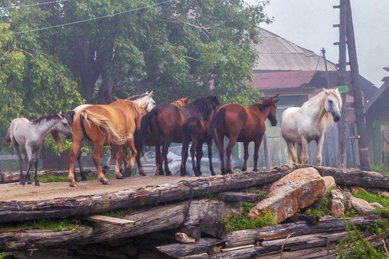 тюлюк, лошади, кони ***photo preview
