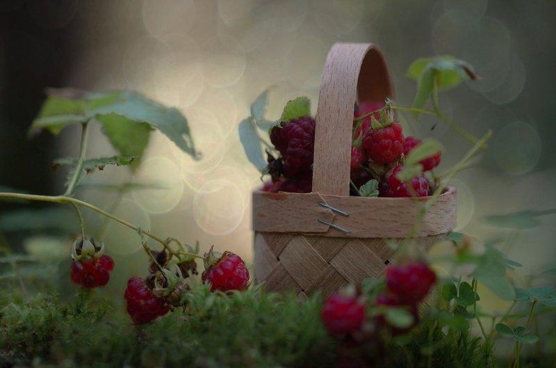 малина, лес, лето, бокешки Уютный лес...photo preview