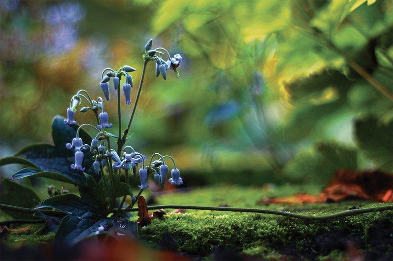 kwiaty,polne,lato,bokeh,martwa natura, flowers, nature, still live photo preview
