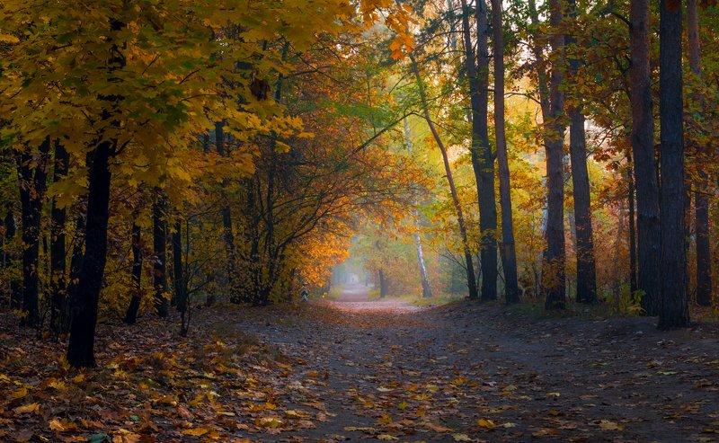 лес, осень, ноябрь, туман Эта красавица- осеньphoto preview