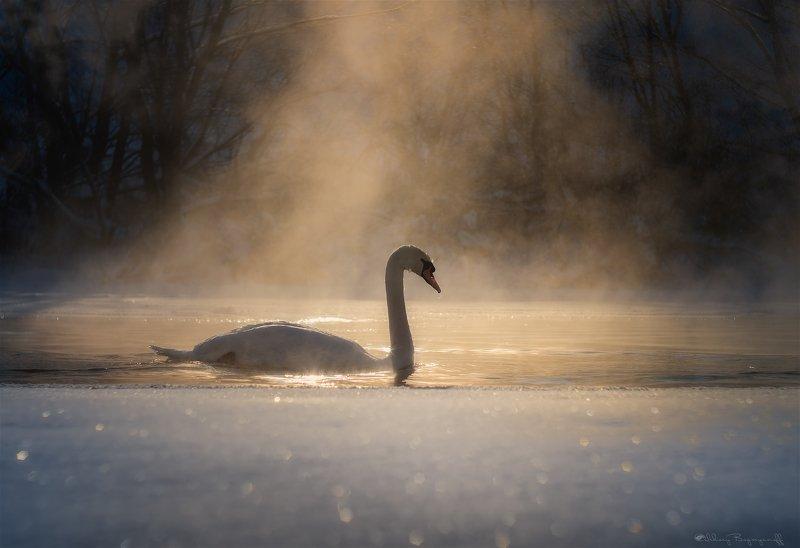 Морозное утро.photo preview