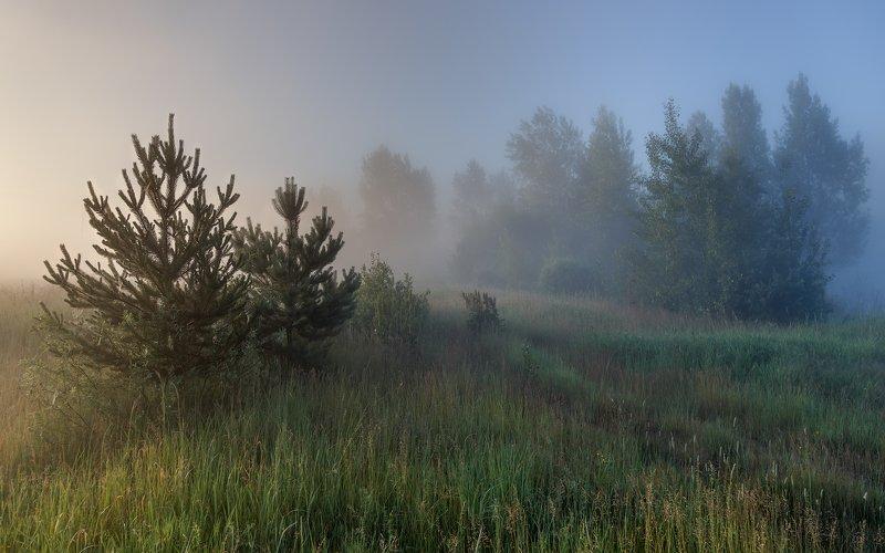 Июльские туманы. фото превью