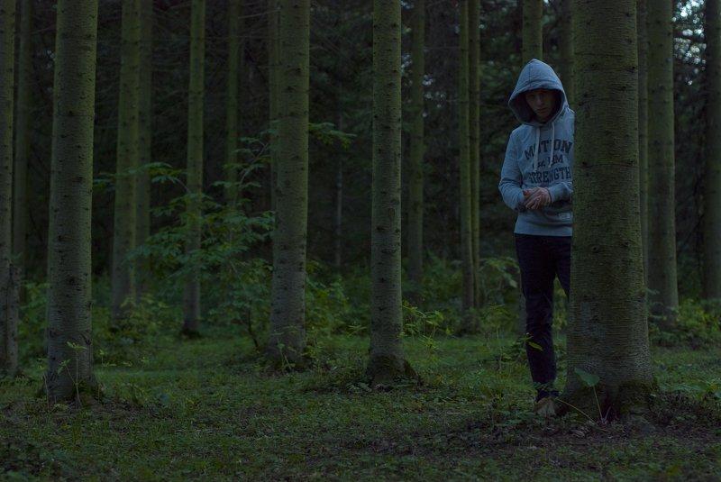 berendey dark treesphoto preview