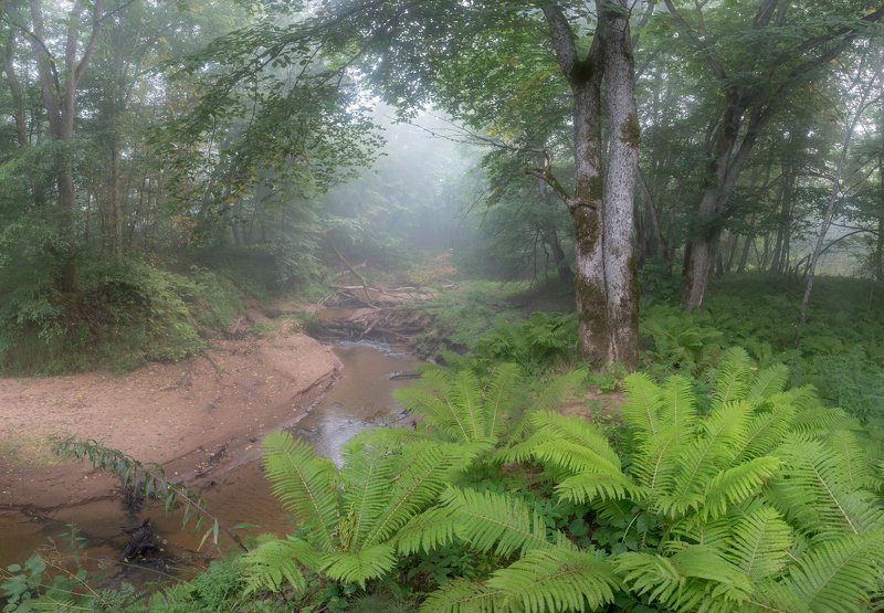 река, папоротник, туман, лес, утро ,пейзаж ,природа Туманное утро в юрском паркеphoto preview