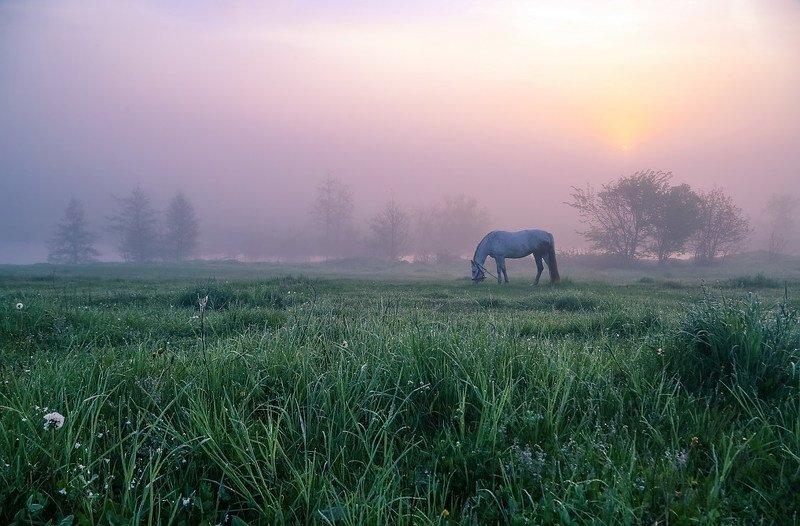 Ой, чий то кінь стоїть фото превью