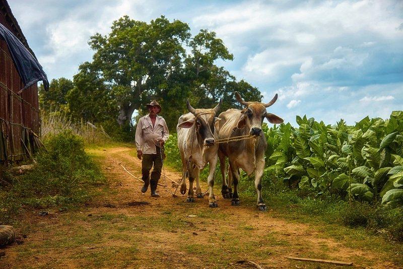 На табачной плантацииphoto preview