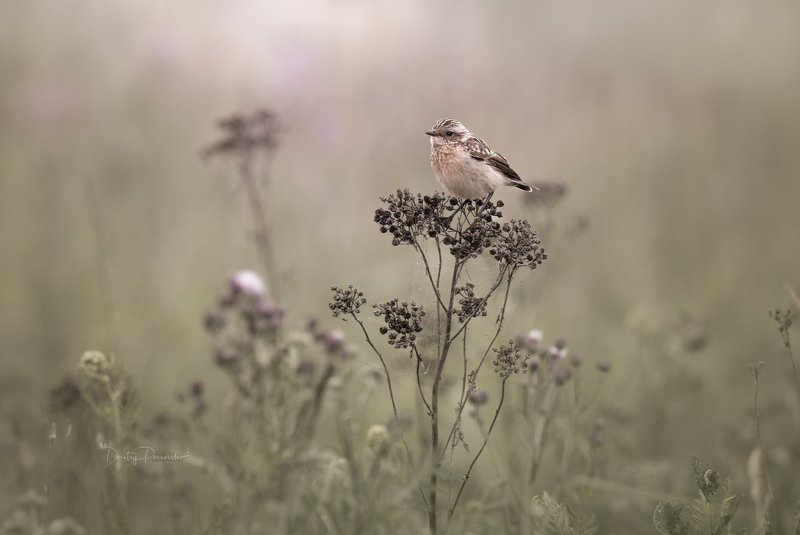 природа, лес, животные, птицы Уж осень близко фото превью