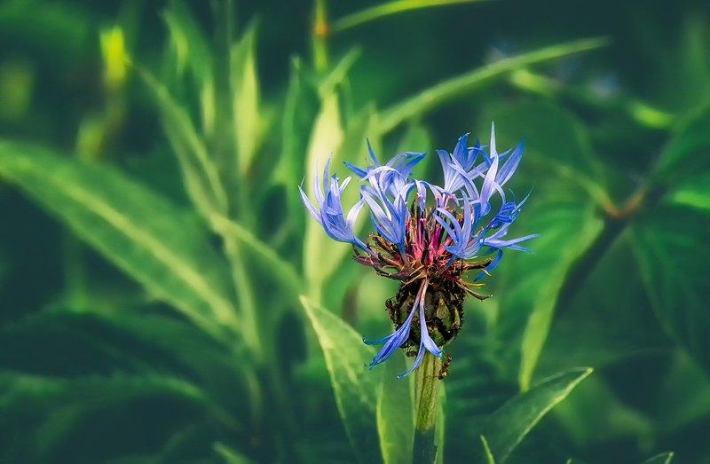 nature, природа, цветок цветочекphoto preview