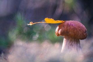 В осень на листке самолете