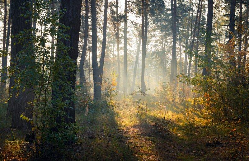 лес, осень, октябрь, утро, рассвет, туман, лучи Разбудило солнце лес осеннийphoto preview