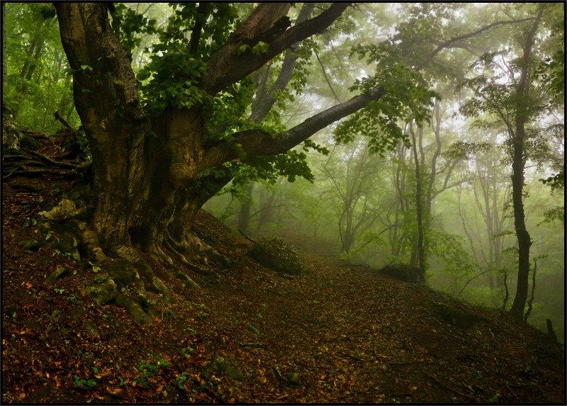 Крымский лес веснойphoto preview
