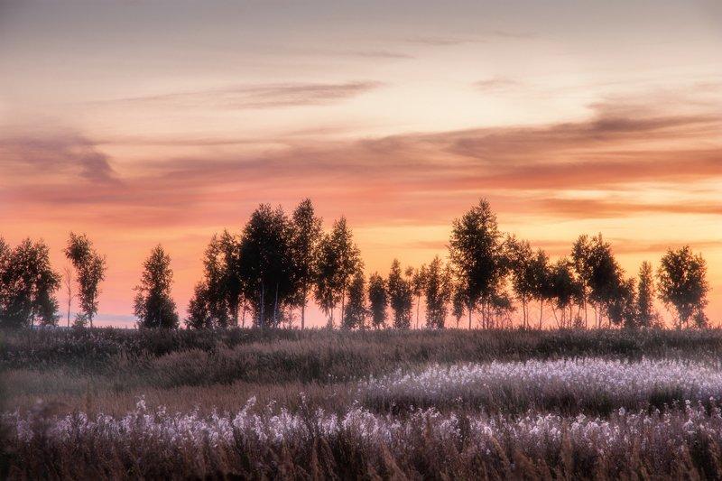 вечер, лес, закат, природа, пейзаж, evening, forest, sunset, nature, landscape Летние вечераphoto preview