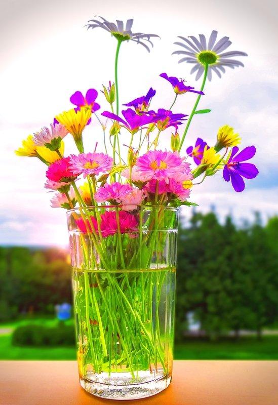 полевые цветы Последние дни летаphoto preview