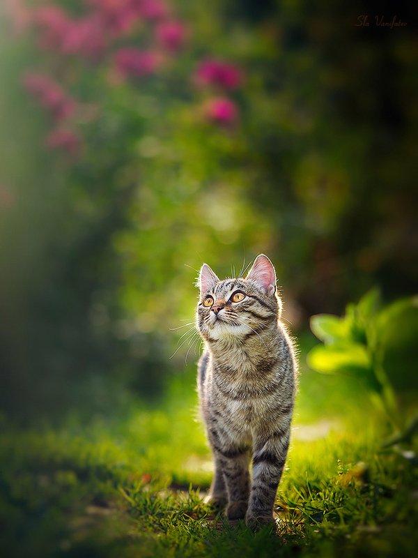 Котинька на закате...photo preview