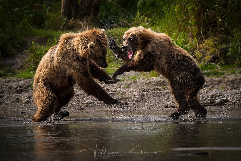 Bear\'s Clashphoto preview