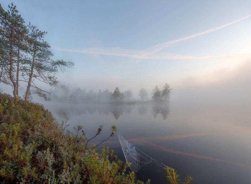 болото, кайф, рассвет ,север ,солнце, свет, туман Болотная акварельphoto preview