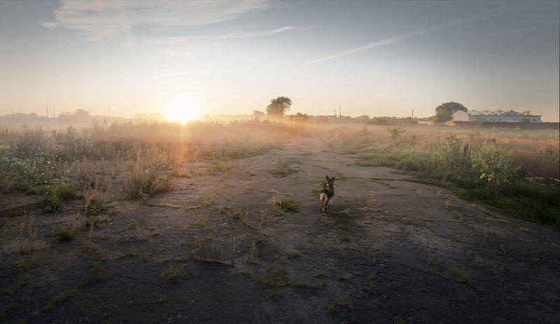 Про утренний туман и маленькую собачкуphoto preview