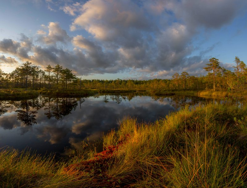 болото, кайф, рассвет ,север ,солнце, свет, закат, облака, отражение, фототур Вечерний светphoto preview