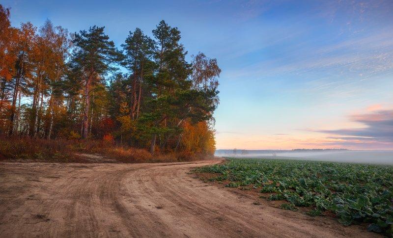 рассвет, осень, поле, лес, Рассвет и осеньphoto preview