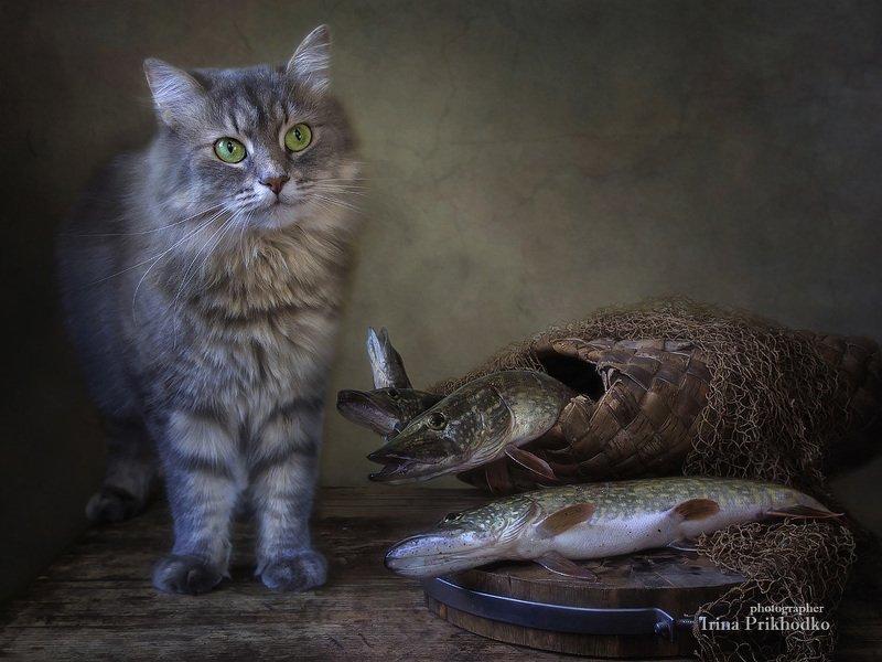 животные, кошка Масяня, натюрморт, зоонатюрморт, котонатюрморт, рыба, щука - А эти хищники меня не съедят?photo preview