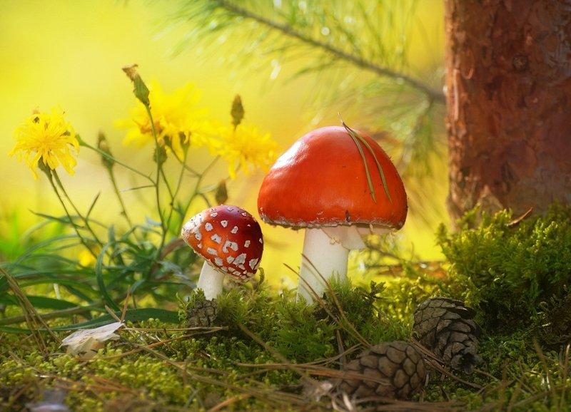природа, грибы, цветы, лето, лес, макро Веснушки от папы, у тебя, сыночек!photo preview