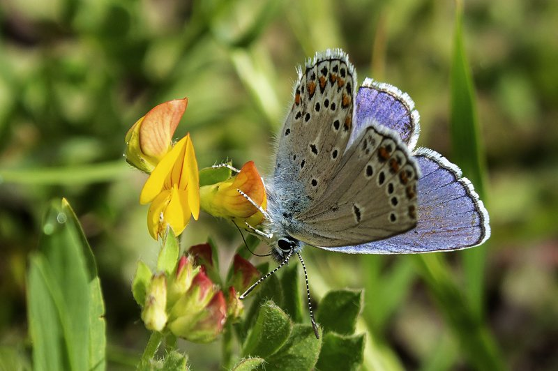 macro,butterfly,art,colors,dreams,photography,life,passion,peace, FREEDOM 5photo preview