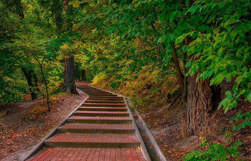 landscape, пейзаж, лес,  деревья,  природа,  прогулка, парк, ступени, осень, ступенькиphoto preview