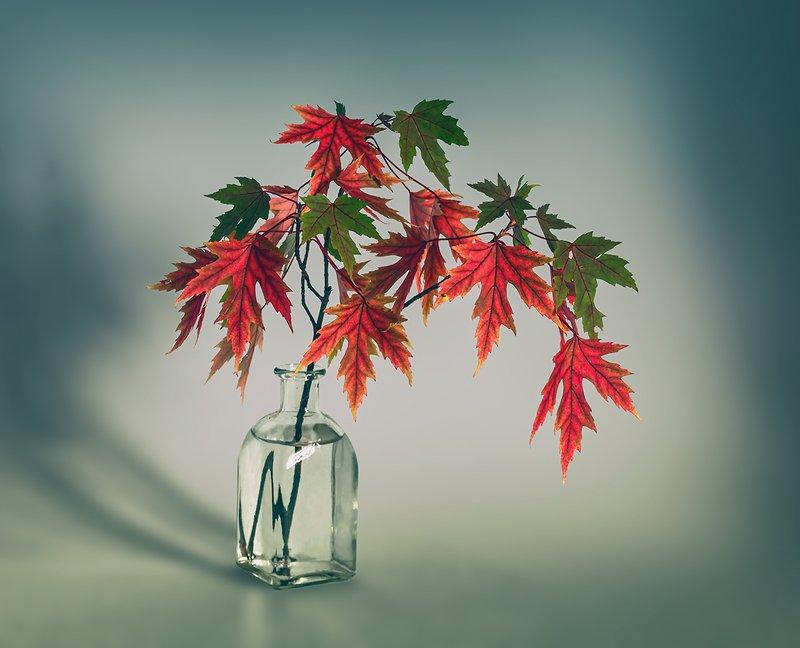 still life, натюрморт,  ветка, клен, лист клена, осенние краски, минимализм натюрморт с веточкой кленаphoto preview