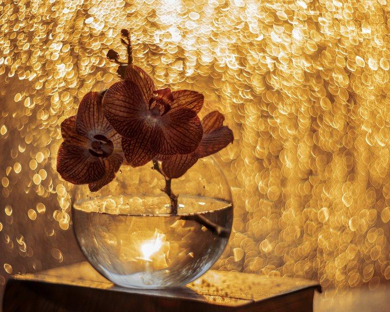 цветы боке закат орхидея гелиос Закатное золотоphoto preview