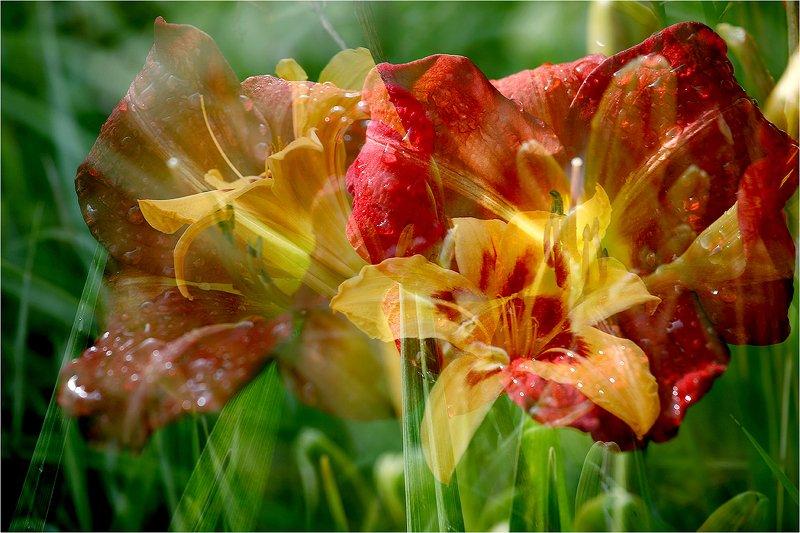 лето, солнце, тепло, цветы, лилейник, Тёплый август.photo preview