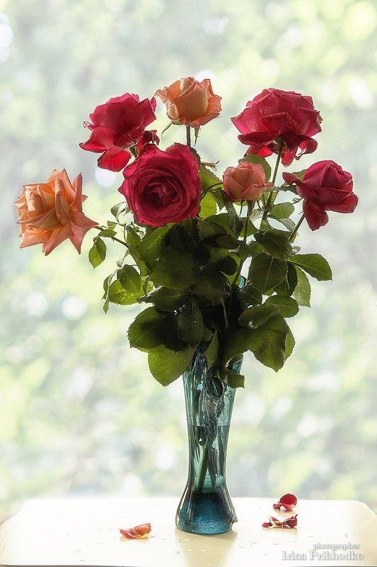 натюрморт, цветы, букет, розы Букет летних роз у окнаphoto preview