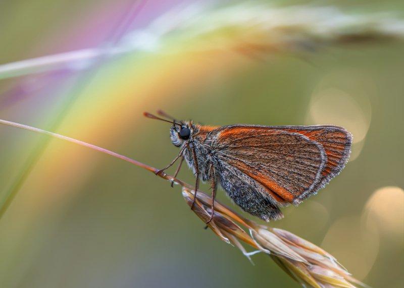 лето бабочка природа радуга макро Под радугойphoto preview