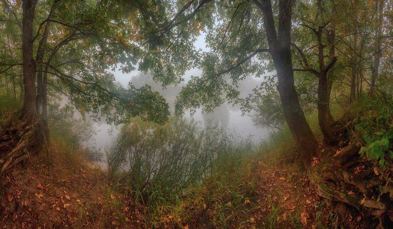 туман, осень, рассвет, река, лес, листопад Повеело холодамиphoto preview