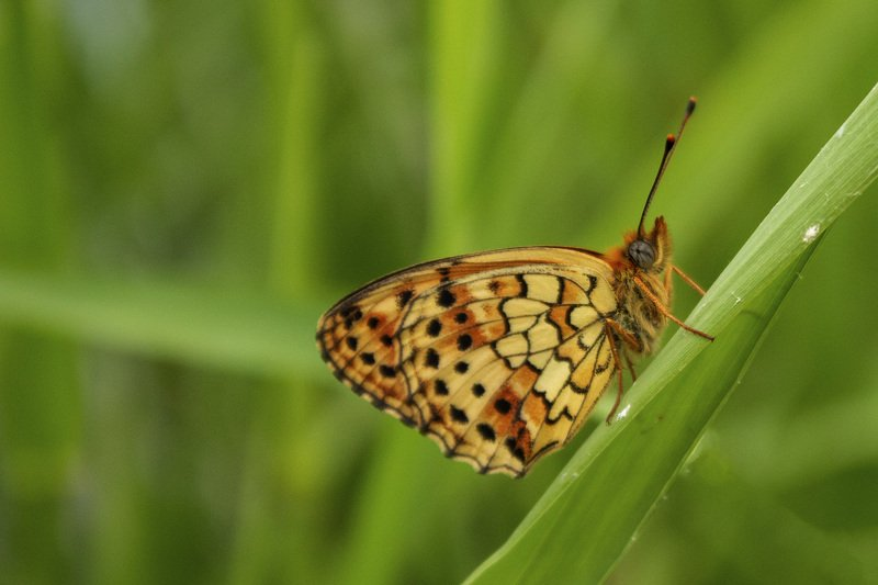 macro,butterfly,art,passion,freedom,image,peace,photography,life, FREEDOM 7photo preview
