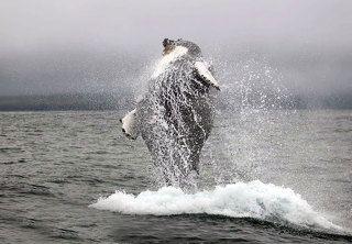 Брачные танцы китов