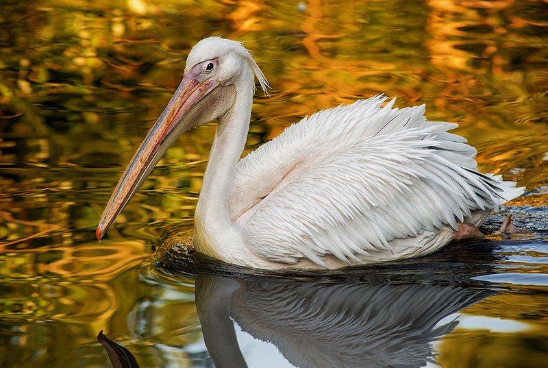 пеликан Белое на золотомphoto preview