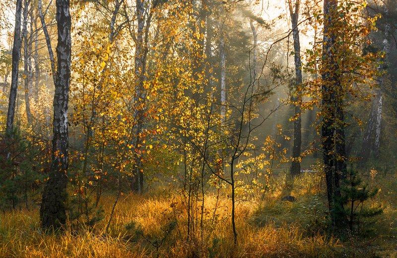 landscape, пейзаж, лес,  деревья,  природа,  прогулка, парк,  осень, осенние краски, осенние листья осенние картинкиphoto preview