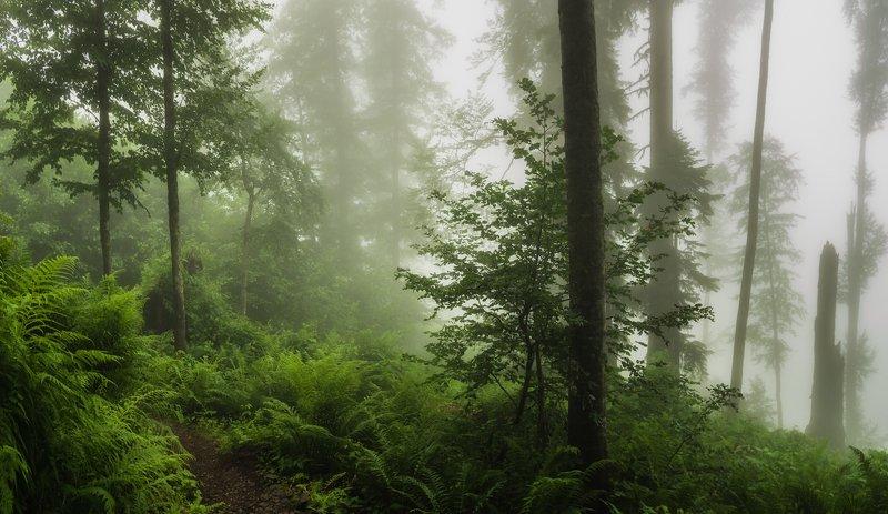 В туманах волшебного лесаphoto preview