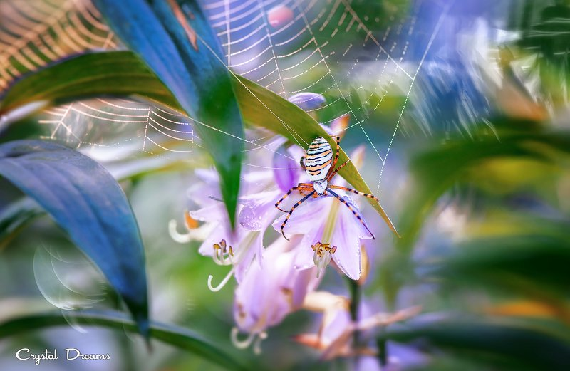 crystal dreams, macro, summer, color, art, nature, spider Live Alonephoto preview