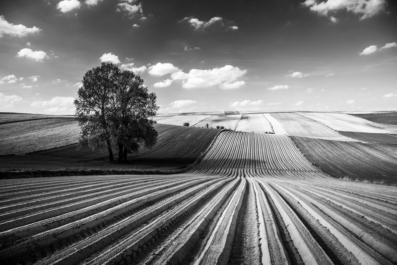 Fields in black and whitephoto preview