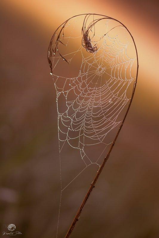 cobweb,nature,light,summer,dawn,spider web,sunrise,Nikon,dreams,catcher, Bad dream catcherphoto preview