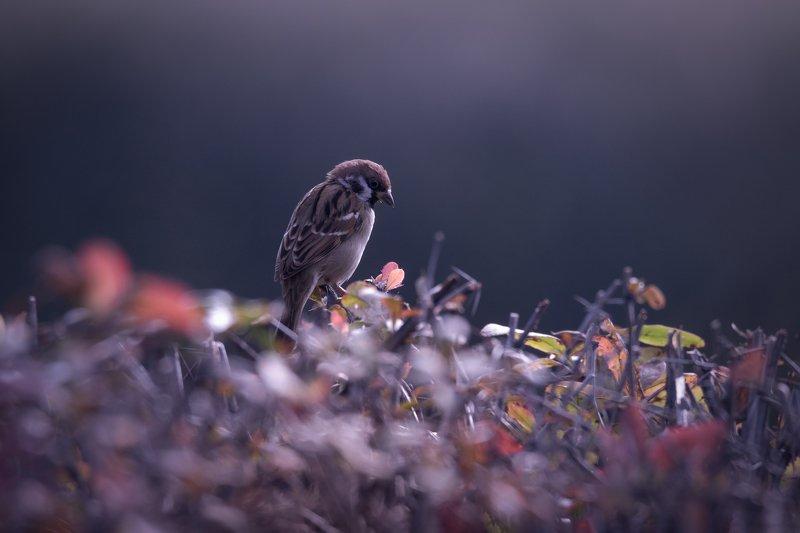 природа, лес, животные, птицы Грустный воробьишкаphoto preview