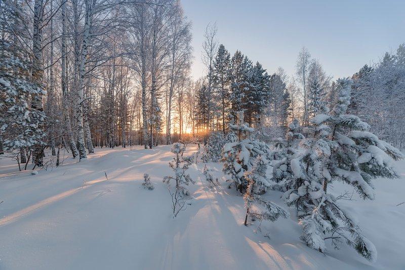 зима, лес, иней, мороз Из зимнего.photo preview
