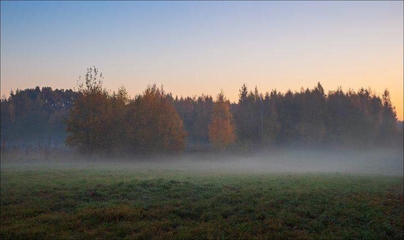 рассвет, поле, лес, туман, Утро тумановphoto preview